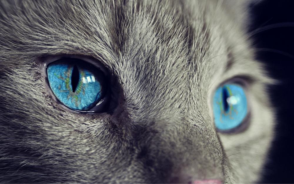Kočka – uctívané a všemi milované zvíře již ve starém Egyptě