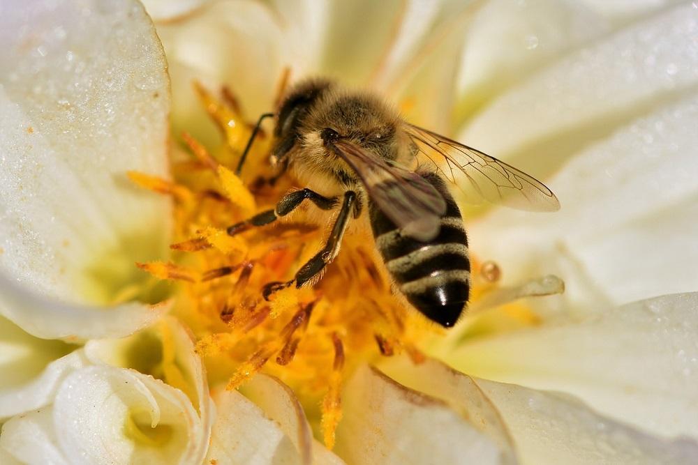 Je nutná změna v rozdělování podpor včelařství